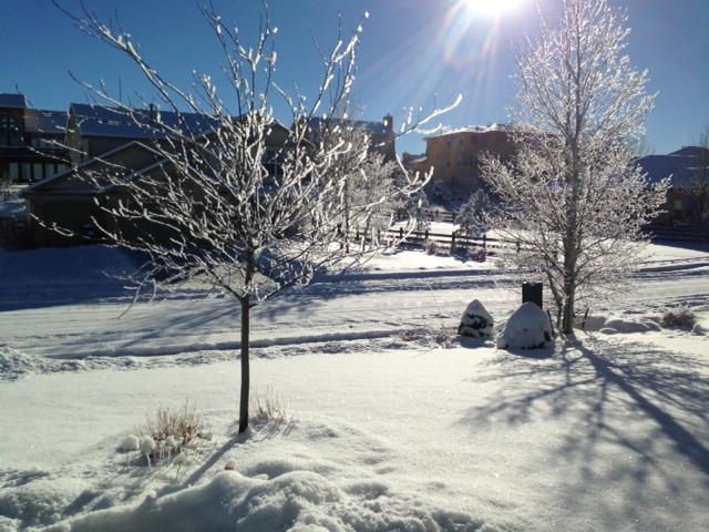 Icy Blues Snowyy10